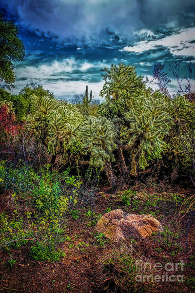 Photograph - Cactus Dreams by Jon Burch Photography
