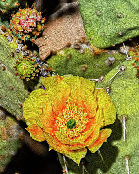 Photograph - Cactus Flower Op46 by Mark Myhaver