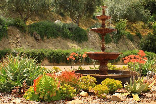 Photograph - Cactus Fountain by James Eddy