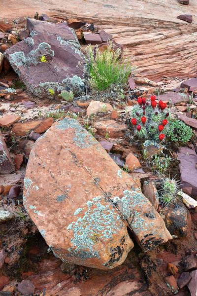 Photograph - Cactus Garden by Ray Mathis