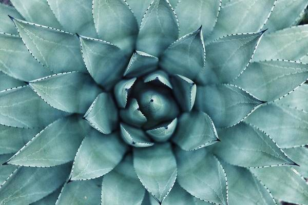 Succulent Wall Art - Photograph - Cactus by Happy Home Artistry