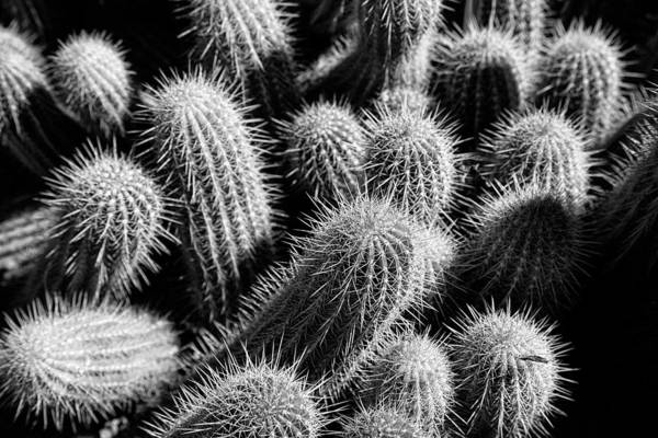 Photograph - Cactus II by Peter OReilly