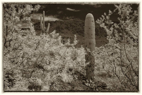 Wall Art - Photograph - Cactus In A Different Light by Michael McGowan