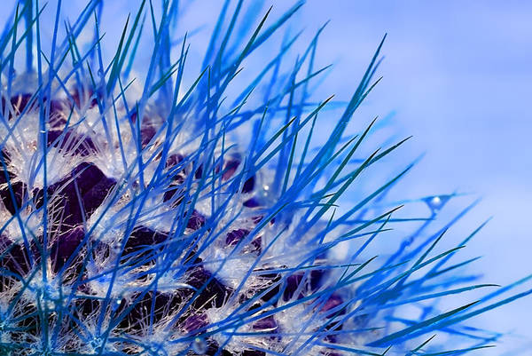 Photograph - Cactus In Blue by Meirion Matthias