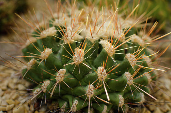 Photograph - Cactus In The City by Miguel Winterpacht