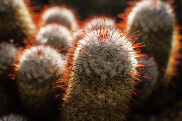 Photograph - Cactus In The Conservatory by Miguel Winterpacht