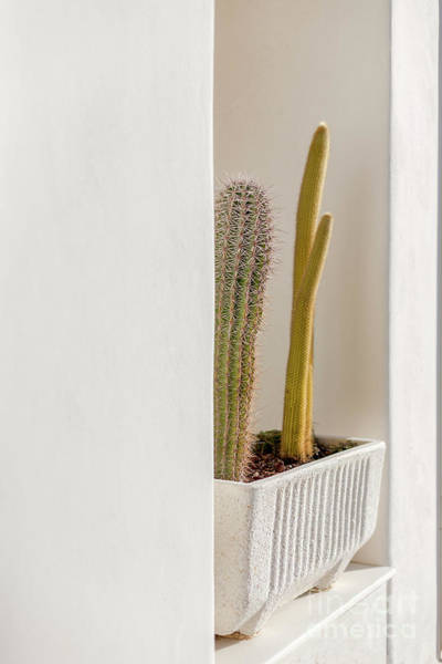 Photograph - Cactus In The Wall by Heiko Koehrer-Wagner