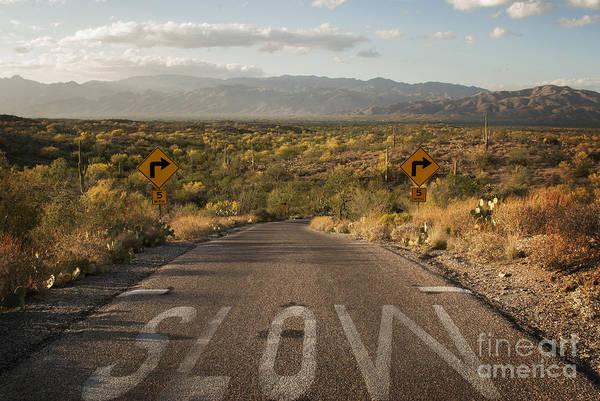 Wall Art - Photograph - Cactus Landscape by Juli Scalzi