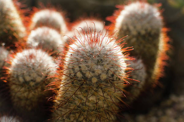 Photograph - Cactus Plants by Miguel Winterpacht