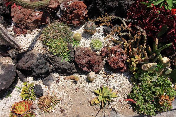 Photograph - Cactus Rock Garden by Aidan Moran