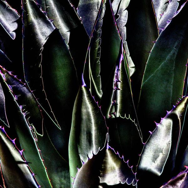 Digital Art - Cactus Sheen by David Patterson