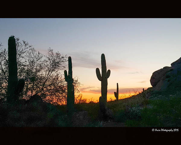Photograph - Cactus Sunset by Ken Arcia