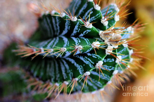 Photograph - Cactus Swirl by Angela Rath