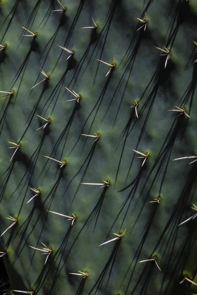Wall Art - Photograph - Cactus Thorn Shadows by Garry Gay