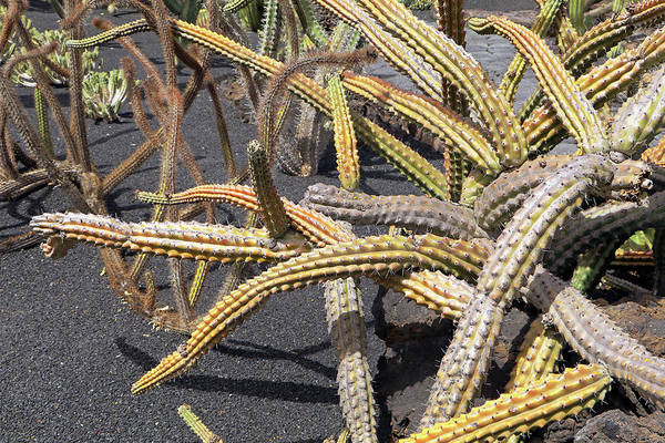 Photograph - Cactus by Tony Murtagh