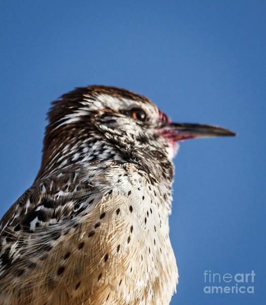 Chirping Photograph - Cactus Wren Profile by Robert Bales