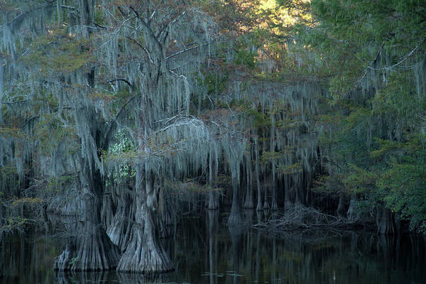 Photograph - Caddo Lake #2 by David Chasey