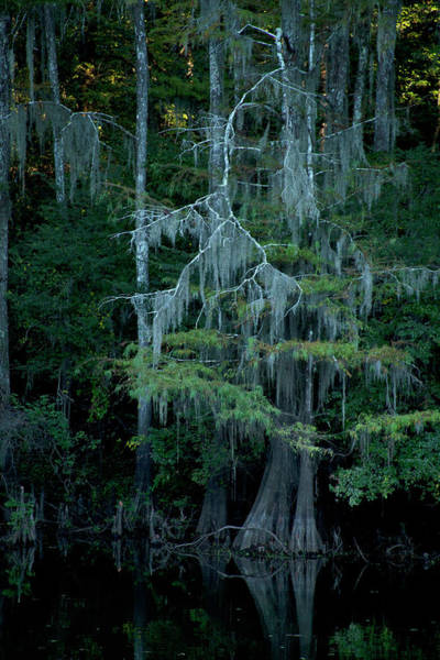 Photograph - Caddo Lake #4 by David Chasey