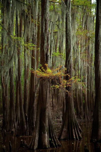 Photograph - Caddo Lake #5 by David Chasey