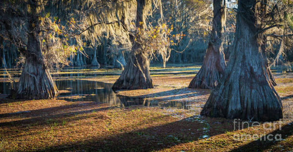 Photograph - Caddo Panorama by Inge Johnsson