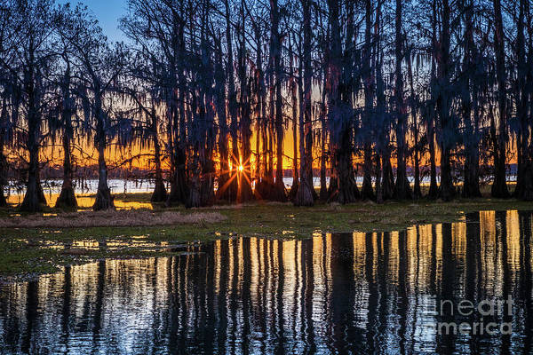 Photograph - Caddo Sunstar by Inge Johnsson