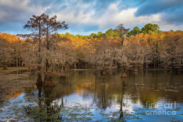 Photograph - Caddo Tree Tops by Inge Johnsson