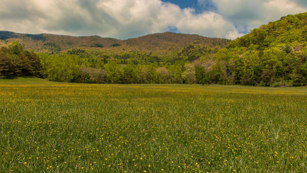 Photograph - Cades Cove Buttercup Field by Brenda Jacobs
