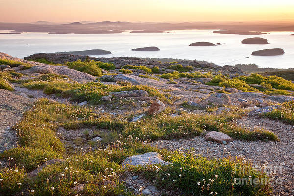 Wall Art - Photograph - Cadillac Mountain View by Susan Cole Kelly