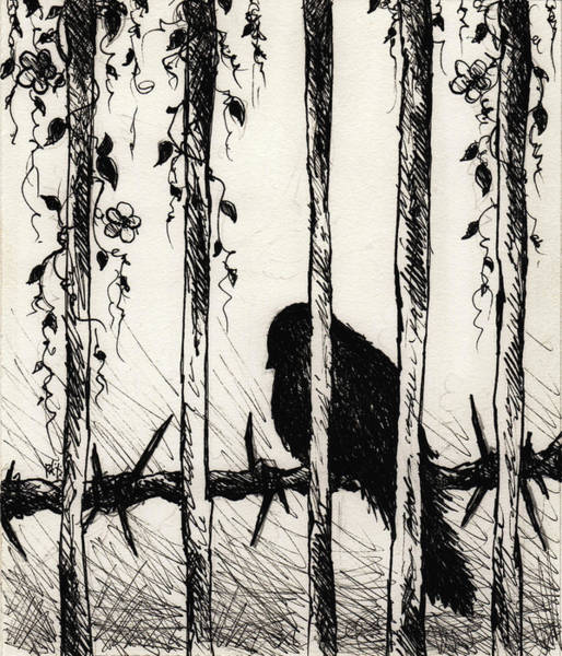 Suffering Drawing - Caged Bird by Rachel Christine Nowicki