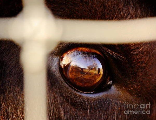 Eye Ball Photograph - Caged Buffalo Reflects by Robert Frederick
