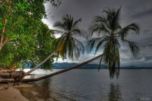 Cahuita Photograph - Cahuita Leaning Palms by Robert Kaler