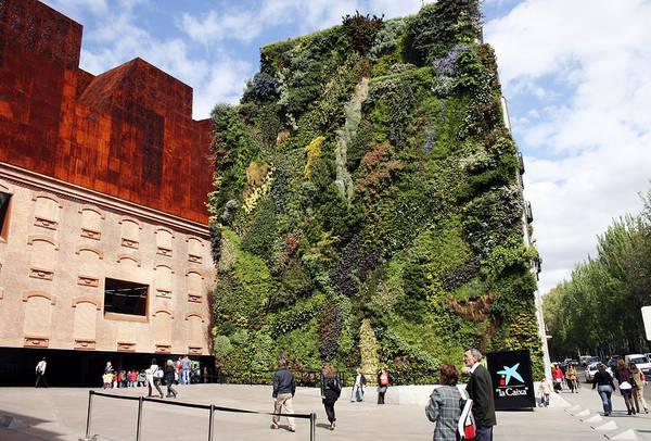 Caixa Forum Wall Art - Photograph - Plants On Facade  by Igor Krylov