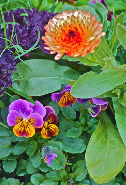 Photograph - Calendula And Pansies by Janis Nussbaum Senungetuk