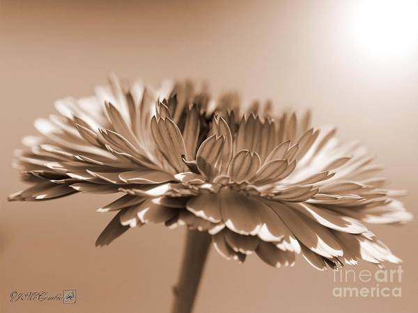 Wall Art - Photograph - Calendula From The Touch Of Red Mix by J McCombie