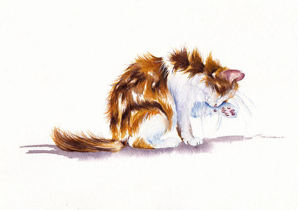 Calico Cat Painting - Calico Cat Washing by Debra Hall