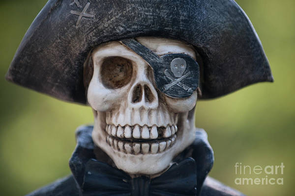 Photograph - Calico Jack by Dale Powell
