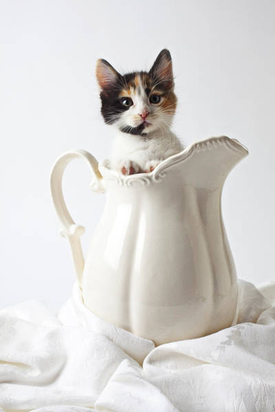 Alert Wall Art - Photograph - Calico Kitten In White Pitcher by Garry Gay