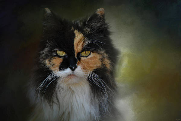 Long Hair Cat Photograph - Calico Stare by Jai Johnson