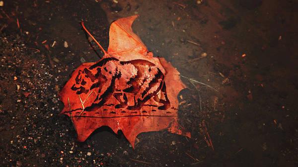 Wall Art - Photograph - California Bear On Leaf by Toni Hopper