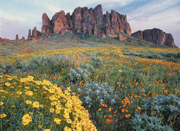 Mountain Range Photograph - California Brittlebush Lost Dutchman by Tim Fitzharris