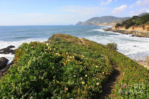 Photograph - California Coast Path by Carol Groenen