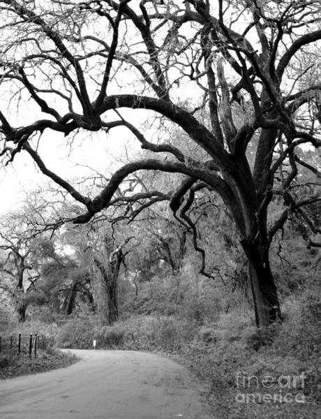 Photograph - California Country Road by Balanced Art