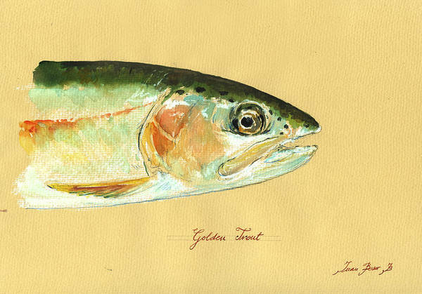 Fly Fishing Painting - California Golden Trout by Juan  Bosco