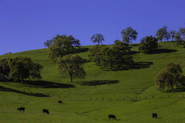 Foothills Wall Art - Photograph - California Green Hillside by Garry Gay