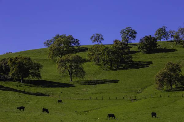 Wall Art - Photograph - California Green Hillside by Garry Gay
