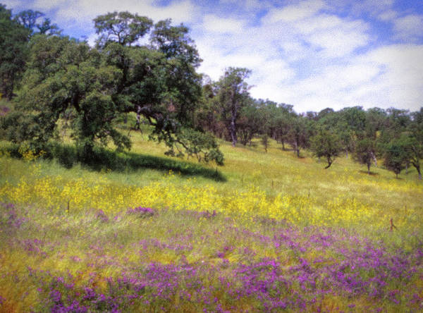 Photograph - California Hills by Samuel M Purvis III