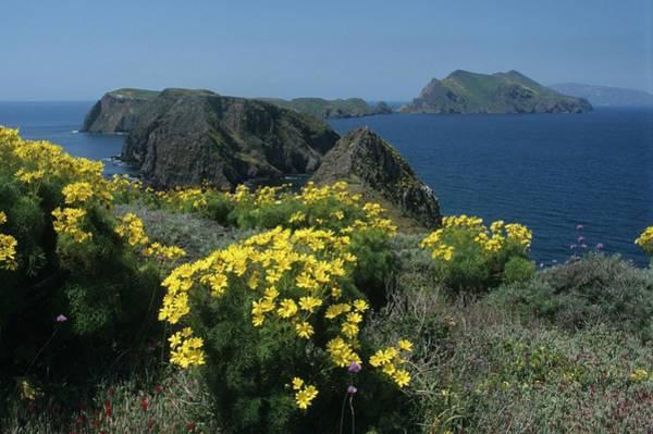 California Island Sunshine Art Print
