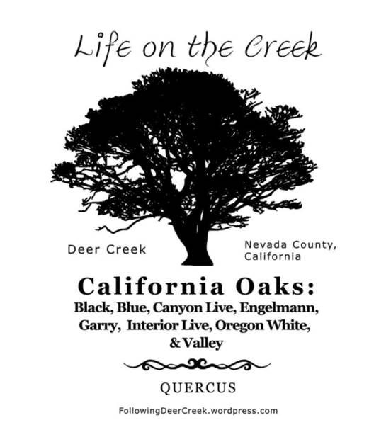 Digital Art - California Oak Trees - Black Text by Lisa Redfern