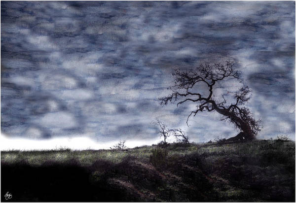 Photograph - California Oak by Wayne King