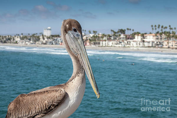 Art Print featuring the photograph California Pelican by John Wadleigh